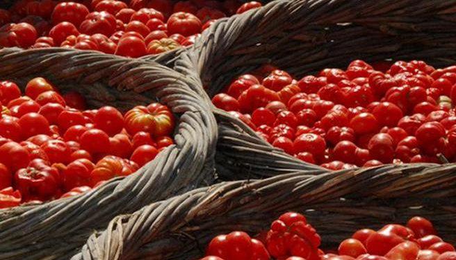Κεγκέρογλου: «Αποζημιώσεις για τις καλλιέργειες που καταστράφηκαν από την tuta absoluta»