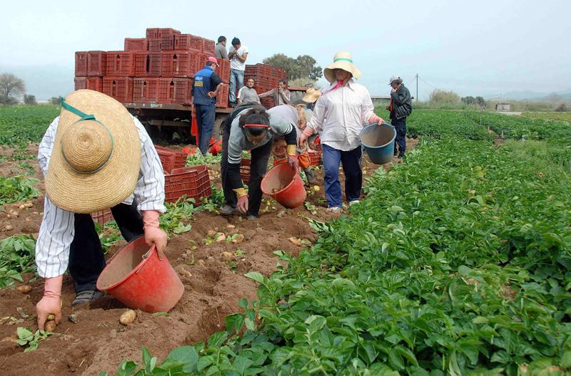 Να μην πληρώσουν πρόστιμα  και ποινές οι παραγωγοί που έλαβαν αναδρομικά ενισχύσεις προηγούμενων ετών