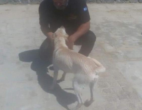 Έσωσαν το σκυλάκι από τα μανιασμένα κύματα στον Καράβολα (βίντεο)