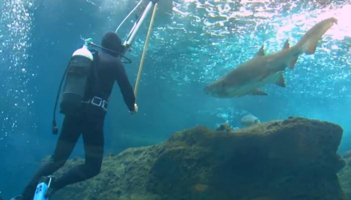 Κολυμπώντας ανάμεσα σε καρχαρίες στο ενυδρείο Κρήτης!