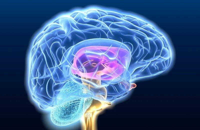Τεστ: Εσείς έχετε υγιή εγκέφαλο;