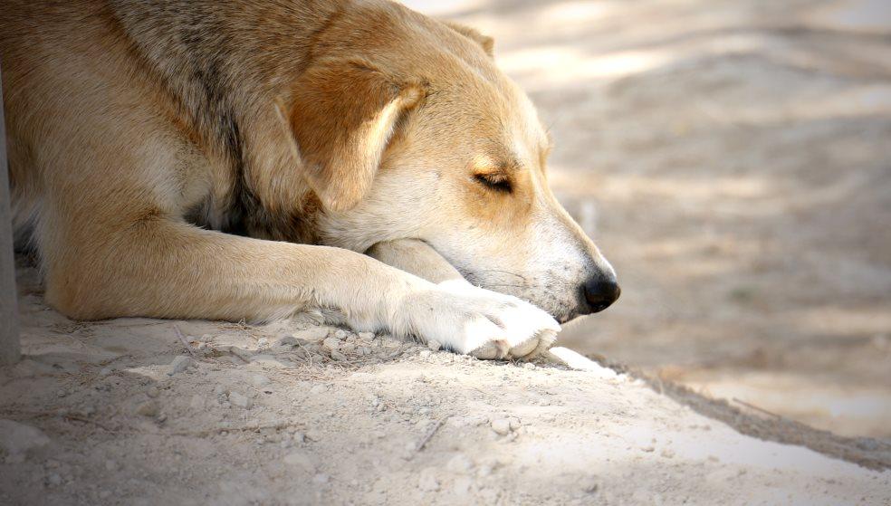 Παράνομο εμπόριο σκύλων και εγχειρήσεις «Φρανκεστάιν» – 59χρονη κάθεται στο σκαμνί
