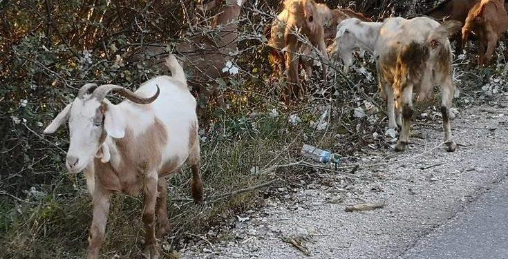 Το ελληνικό γάλα που μπορεί να αποτελέσει σημείο αναφοράς στην Ευρώπη