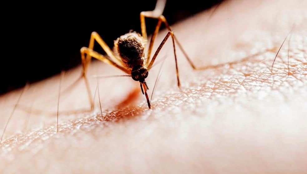 «Ξαναχτυπά» ο ιός του Δυτικού Νείλου - Που καταγράφονται τα κρούσματα;