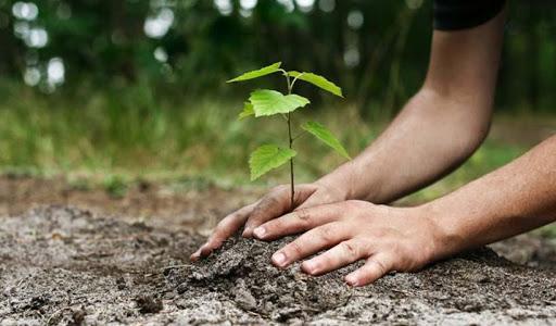 Δενδροφύτευση στο ΟΑΚΑ, στην Παγκόσμια Ημέρα Περιβάλλοντος