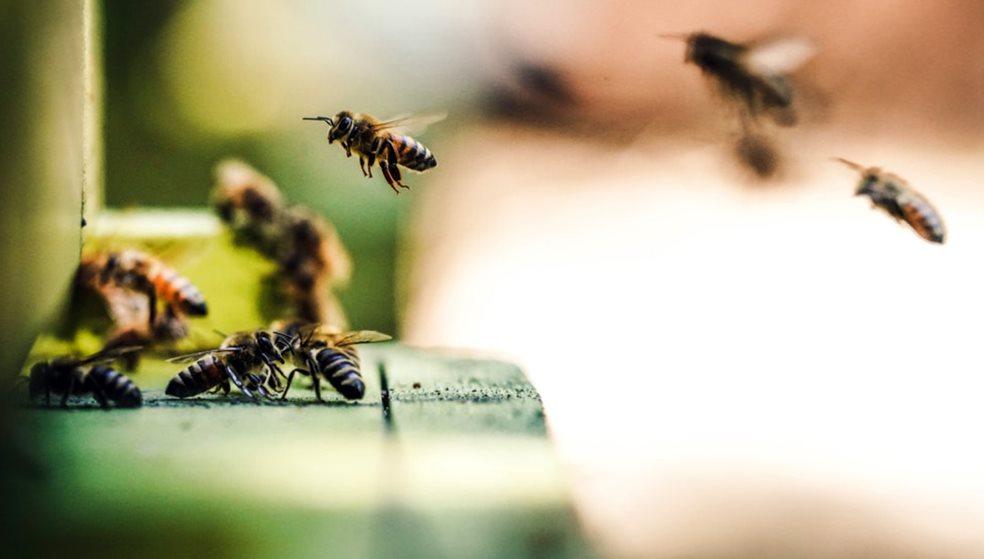 Εξαφανίζονται οι μέλισσες - Πολλά κρούσματα δηλητηριάσεων