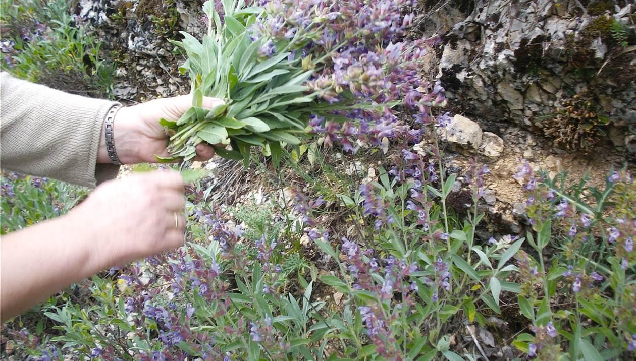 Τα αγριόχορτα της Κρήτης και η διατροφική τους αξία