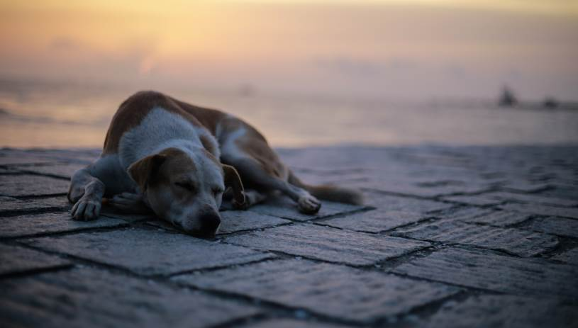 Κακοποίηση Ζώων: Πιο αυστηρές κυρώσεις