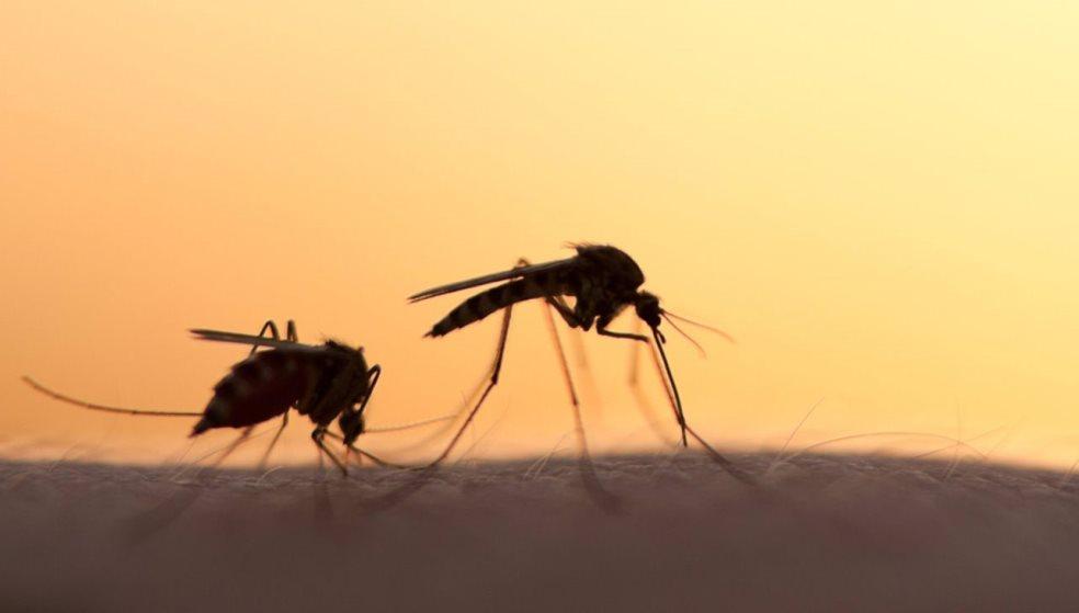 Ξεκίνησαν ψεκασμοί για τα κουνούπια - Μεγαλύτερος κίνδυνος λόγω κακοκαιρίας