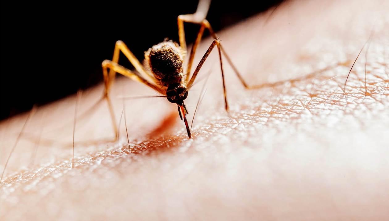 Συναγερμός από «Guardian» για τα κουνούπια και τον ιό του Δυτικού Νείλου
