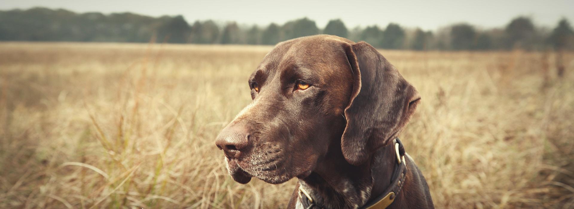 Εισαγγελική παρέμβαση για το «κολαστήριο» σκύλων στο Ηράκλειο