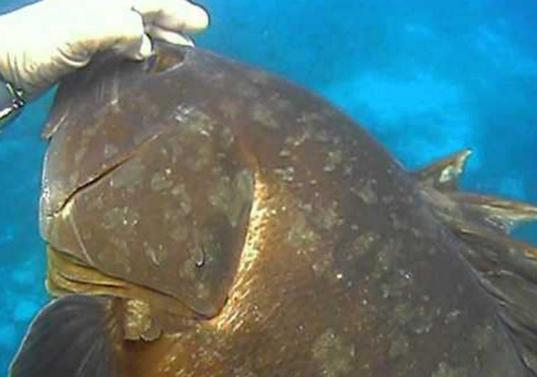 Κρήτη:Με δόλωμα μια σουπιά έβγαλε αυτό το ψάρι–Το τσίμπημα στο αγκίστρι και οι εικόνες που ακολούθησαν