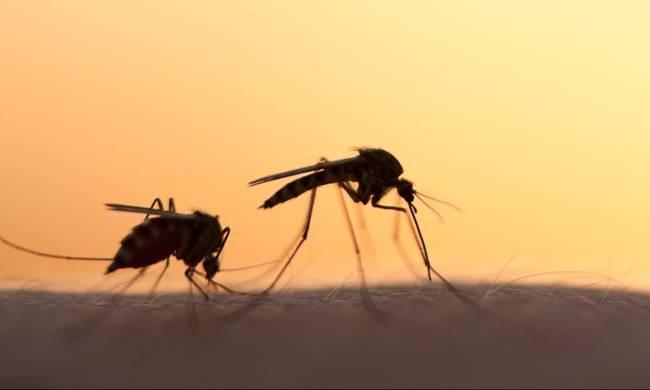 Κουνούπια: Aπαλλαγείτε από την ενοχλητική φαγούρα