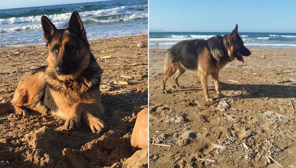 Βρέθηκε σκύλος σε παραλία στις Γούβες