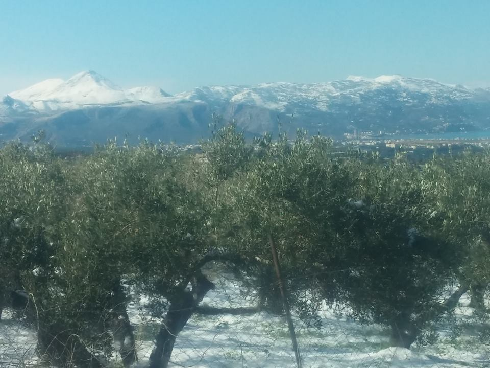 Οι αγρότες καταγράφουν την καταστροφή για τα αμπέλια- Ο χιονιάς «χτύπησε» ελαιόδεντρα και καλλιέργειες