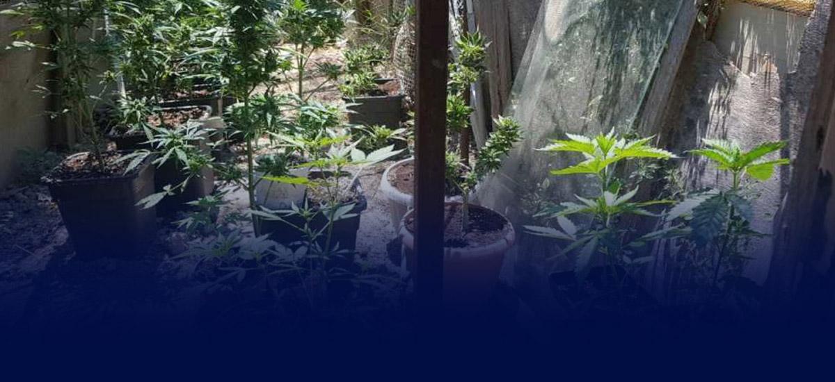 """Ρέθυμνο: Μετά τα """"νανάκια"""" εντοπίστηκαν και οι καλλιεργητές τους"""