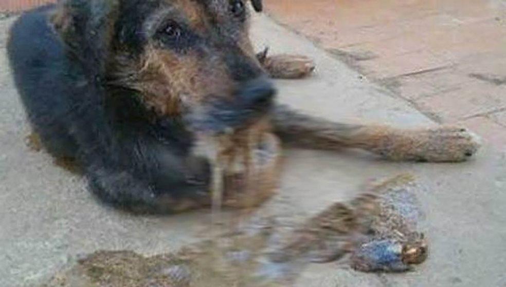 Απίστευτη κτηνωδία στο Κεραμούτσι! Πέταξαν φόλες σκορπώντας το θάνατο