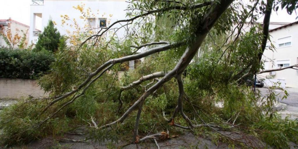 Σε ποιες περιοχές θα κοπούν δέντρα λόγω «επέλασης» εντόμου;