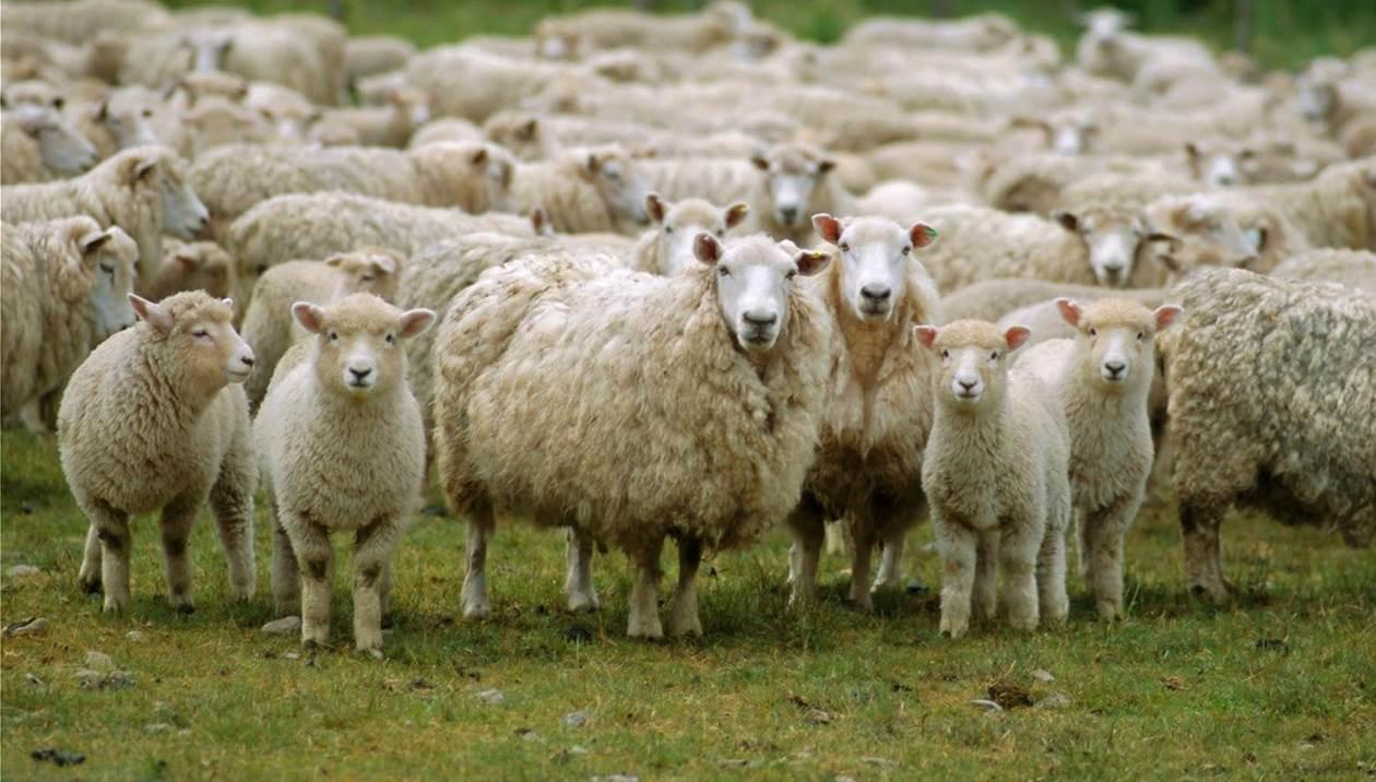 Προσοχή στα αιγοπρόβατα λόγω κακοκαιρίας
