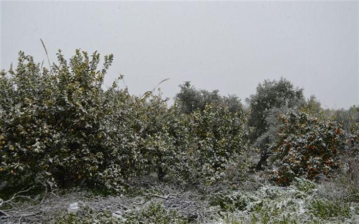 Τεράστιες καταστροφές στις καλλιέργειες στην Αιγιαλεία
