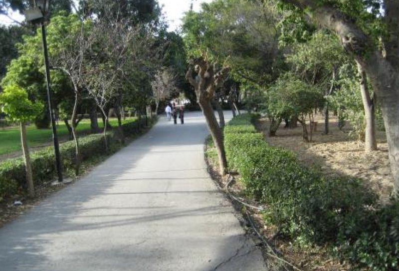 Δεν προβλέπεται η κοπή δέντρου στο Πάρκο Γεωργιάδη από τον Δήμο Ηρακλείου