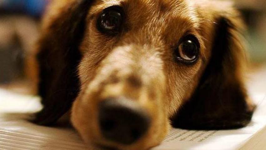 Επί… τάπητος η προστασία των αδέσποτων ζώων