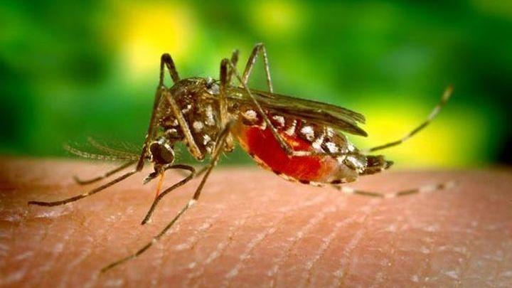 Τα κουνούπια στην Κρήτη «οργιάζουν» - Έρχεται δύσκολο καλοκαίρι