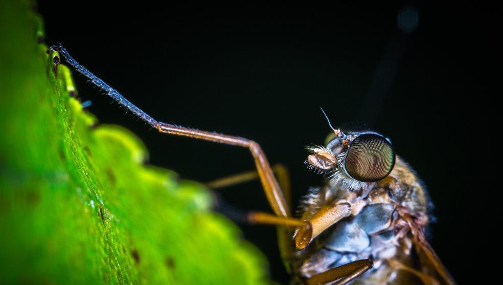 Αφόρητη η κατάσταση με τα κουνούπια - Όχι και τόσο αθώα τα τσιμπήματά τους-Βίντεο
