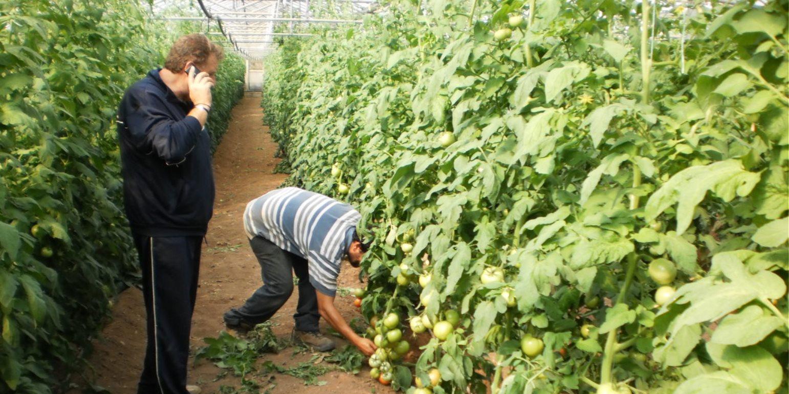 Ιεραπετρίτης αγρότης περιμένει μία «συγνώμη» από τον κλέφτη