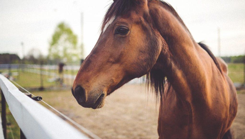 Άλογο έπεσε σε πηγάδι