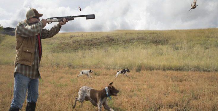 Ρίχνουν φόλες στη Σητεία – Έχουν σκοτωθεί έξι κυνηγετικά σκυλιά