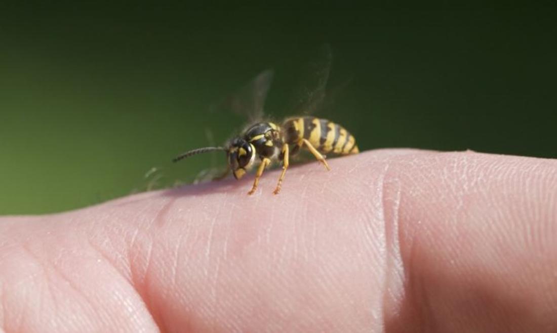 Απίστευτο τροχαίο λόγω... μέλισσας
