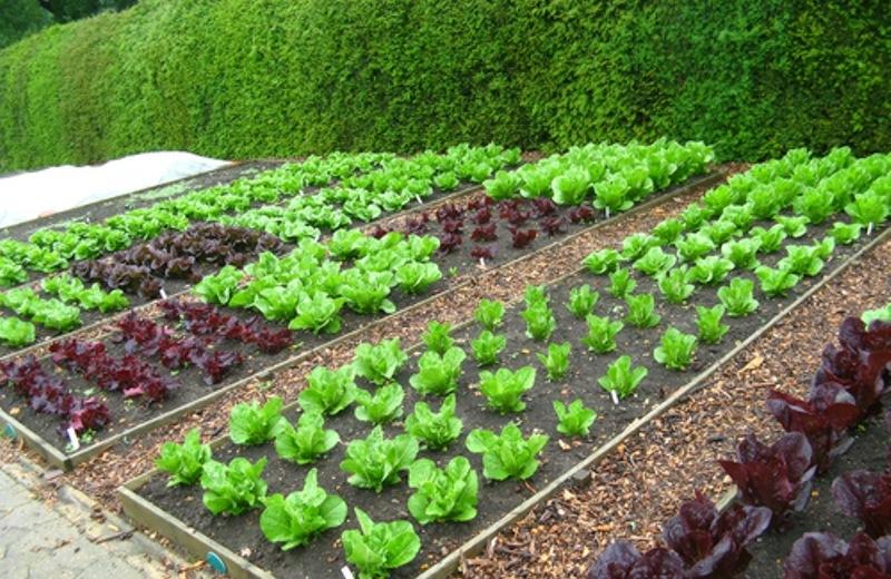 Αποτέλεσμα εικόνας για δημοτικός λαχανόκηπος