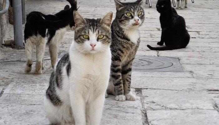 Η αστυνομία προσήγαγε το ζευγάρι στο Ρέθυμνο για την ανάρτηση με τις φόλες και τις γάτες