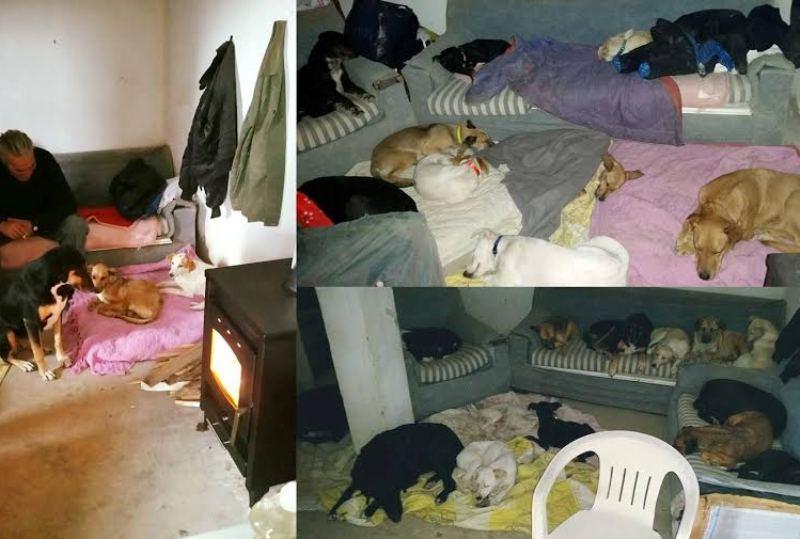 Αλέξανδρος Ηλιάδης: Ο Ηρακλειώτης που προσφέρει καταφύγιο σε 76 σκυλιά και έναν άστεγο συμπολίτη μας