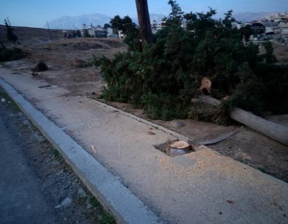 Κρήτη: Τι τους έφταιγαν τα δέντρα; (φωτογραφίες)