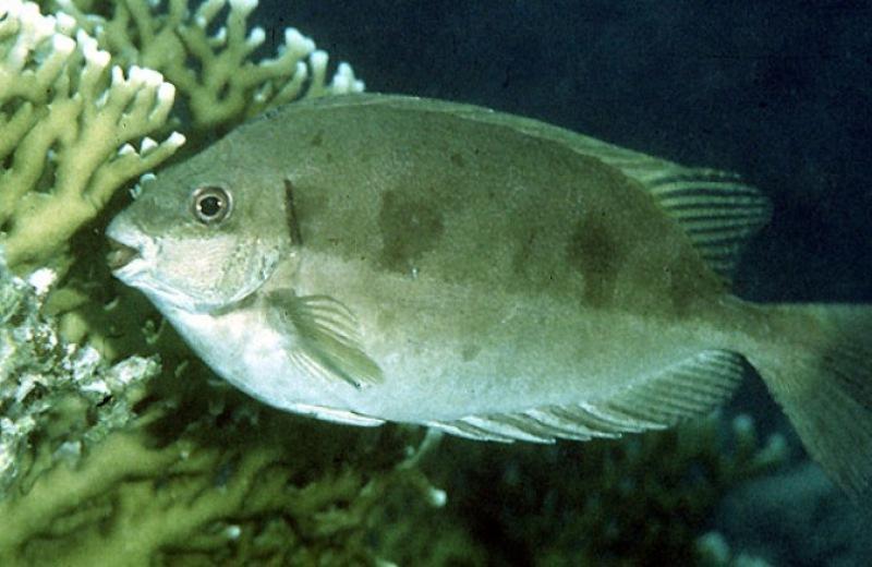 Ψαραδες στην Κρήτη εξάγουν... Γερμανούς- Ένα παρεξηγημένο ψάρι που πωλείται ως και 24 ευρώ το κιλό!