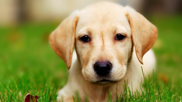 Ανήλικοι έπνιξαν σκυλί στο Θραψανό