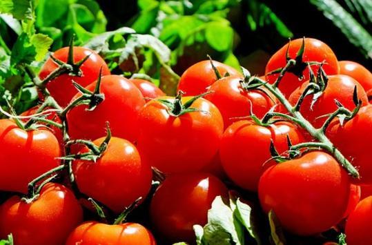 Τούρκικες ντομάτες με απαγορευμένα φυτοφάρμακα κατακλύζουν την ελληνική αγορά