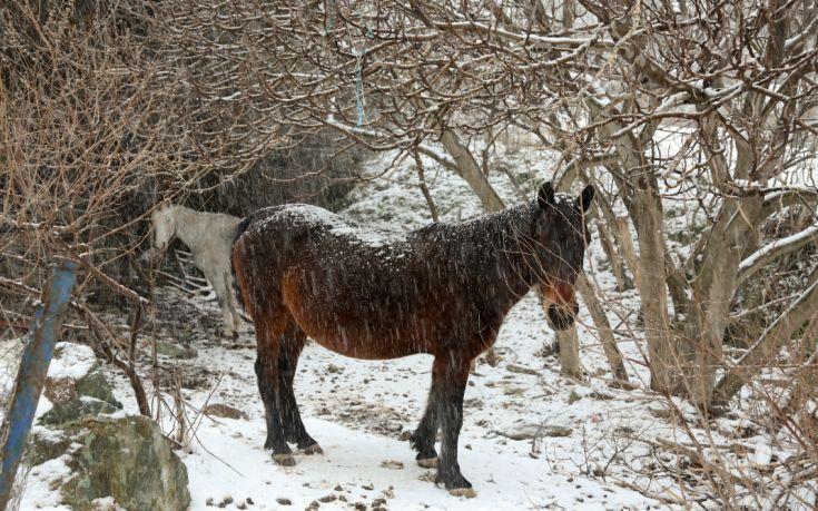 Στέγες από στάνες υποχώρησαν από το χιόνι και σκότωσαν ζώα