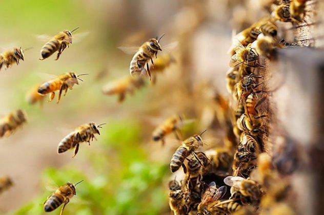 Κινδυνεύουν οι Μέλισσες - Χημικός τρόμος τις απειλεί από τη χρήση φυτοφαρμάκων