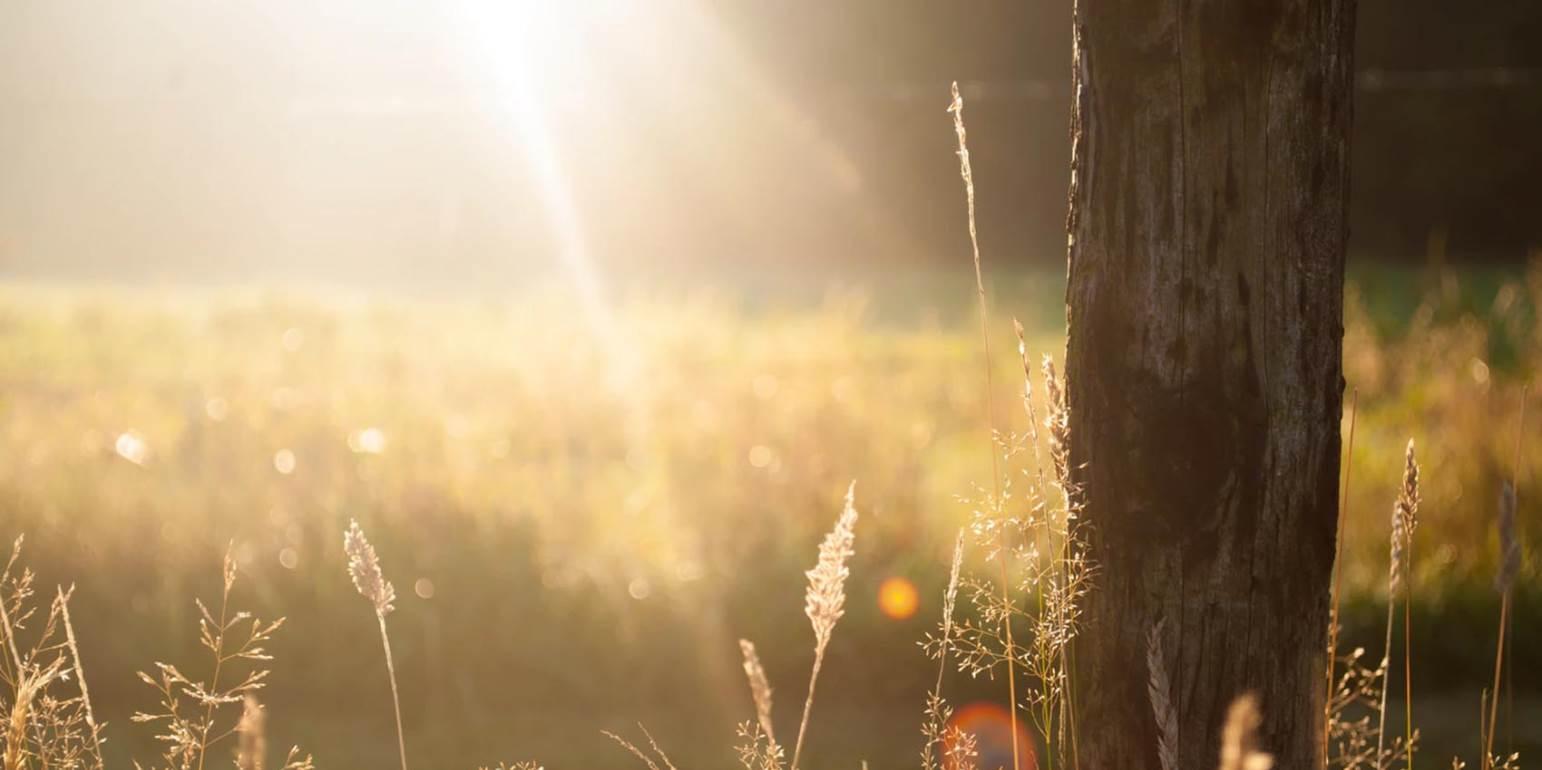 Το «καυτό» φθινόπωρο κατέστρεψε τις καλλιέργειες - Προβλήματα σε κηπευτικά & λάδι