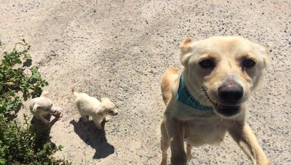 Σκυλίτσα εγκαταλείφθηκε με τα κουταβάκια της και αναζητούν σπίτι