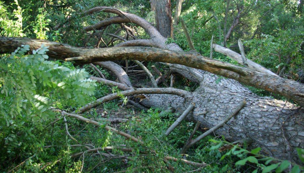 Συναγερμός στην Πυροσβεστική - Έπεσαν τρία δέντρα