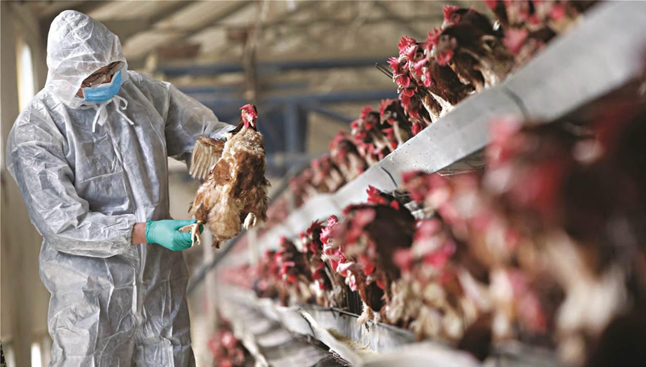 Επιστρέφει η απειλή της γρίπης των πτηνών