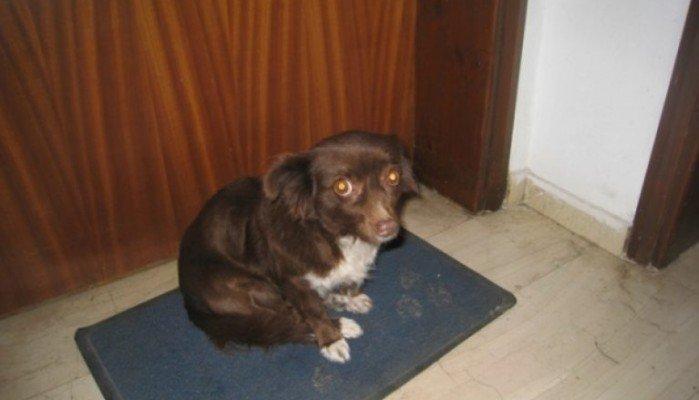 Πρόστιμο 10.000 ευρώ σε οικογένεια που εγκατέλειψε σκυλίτσα