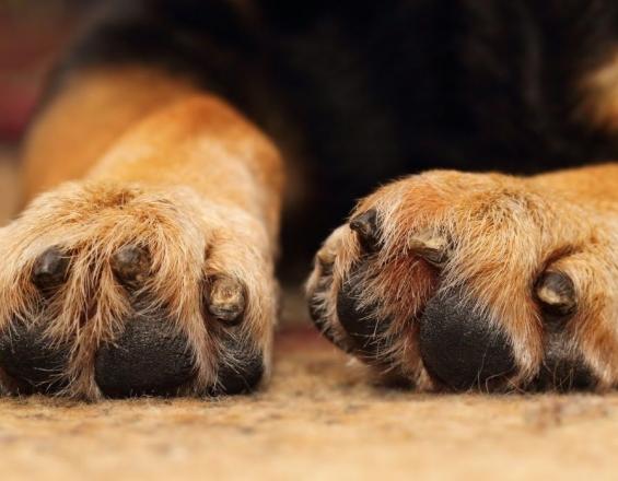 Κρήτη: Δωρεάν εξετάσεις στα κατοικίδια ζώα - Όλες οι πληροφορίες