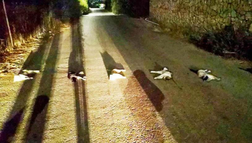 Σάλος από την κτηνωδία με γάτες: Ψάχνουν τον ασυνείδητο που έβγαλε μέχρι και τα μάτια
