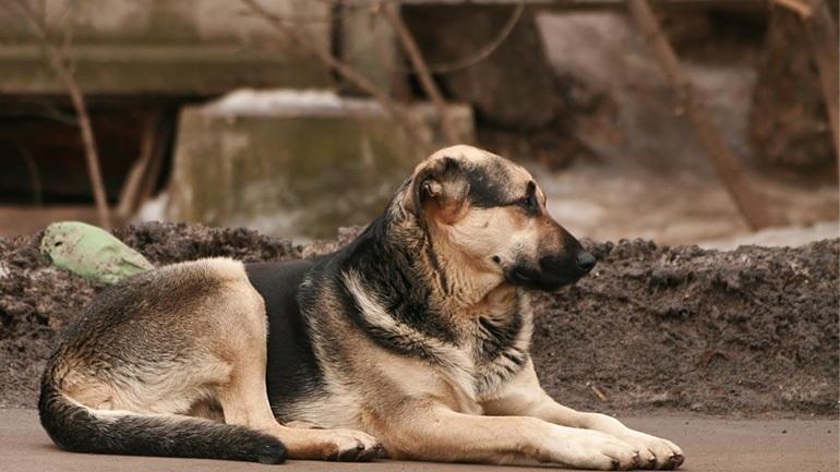 Ερωτηματικά στην υπόθεση δηλητηρίασης δεκάδων ζώων από φόλα
