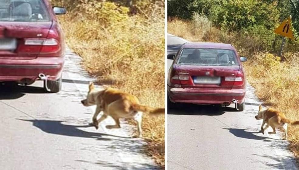 Νέα κτηνωδία στην Κρήτη: Έδεσε σκύλο από το λαιμό και τον άφησε να σέρνεται στο δρόμο